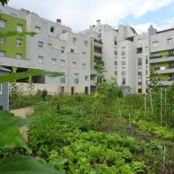 Un jardin partagé en ville