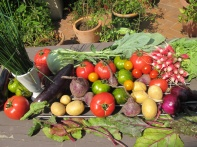 Légumes d'été du panier Amap
